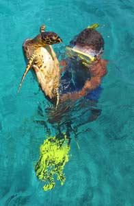 îles aux seychelles Tortue de mer