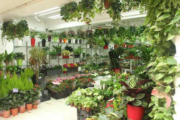 magasin marché aux fleurs