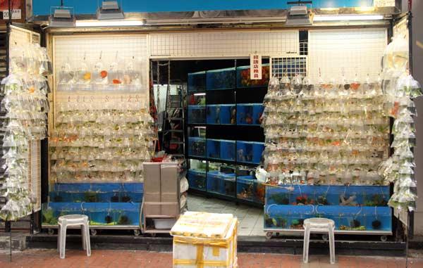 Magasin du marché aux poissons rouges