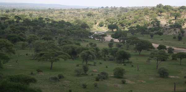 paysage tarangire