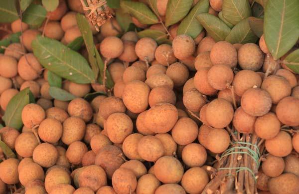 Longanes vendus en branches