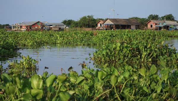 paysage jacinthes eau