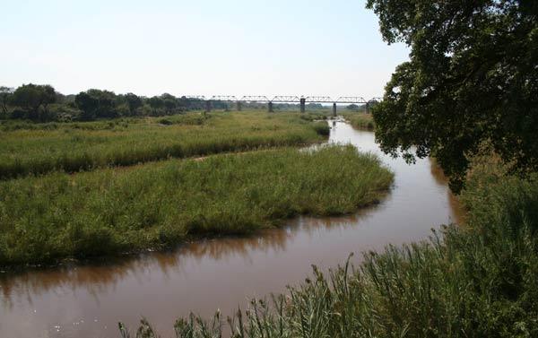Rivière Sabie dans le Kruger