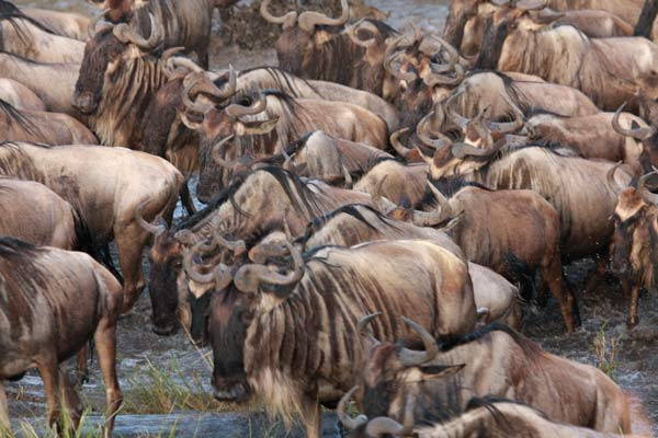 zoom grande migration