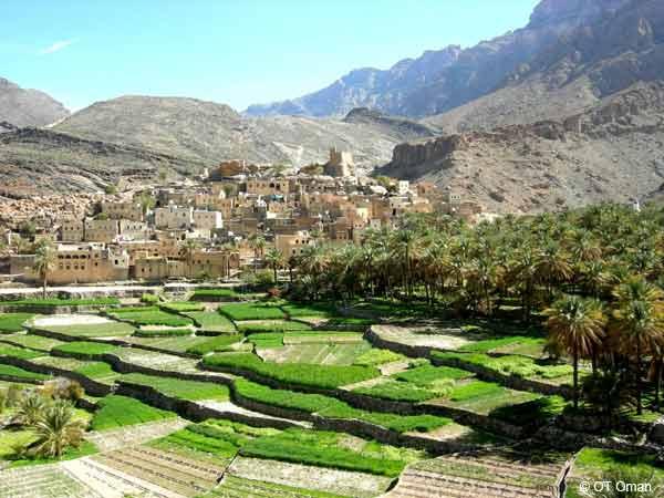 Jabal Akhdar Sultanat d'Oman