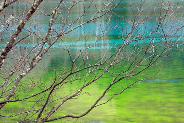 lac bleu et vert jiuzhaigou