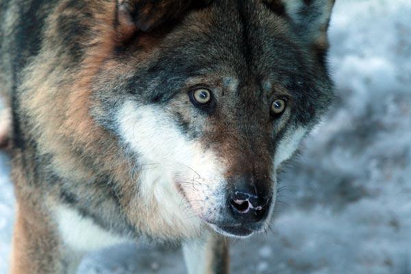 parc alpha saint martin vésubie loup