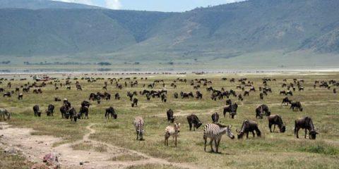 safari agence de voyages