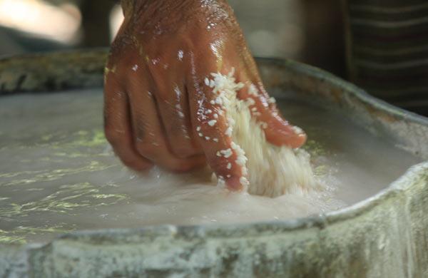Riz broyé pour les feuilles de riz