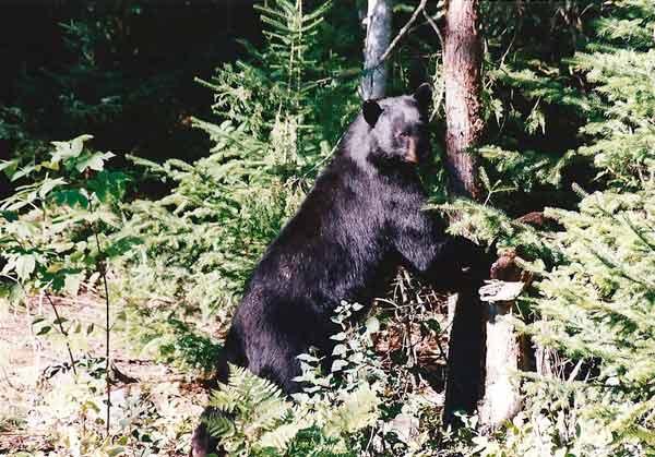 Voyage au Canada, photo animalière