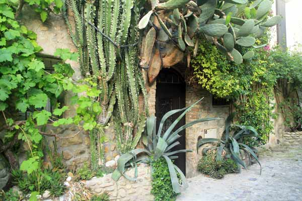 vegetation cagnes