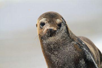 séjour aux Galapagos lion de mer