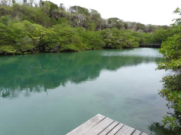 Galapagos : lagune Las Ninfas