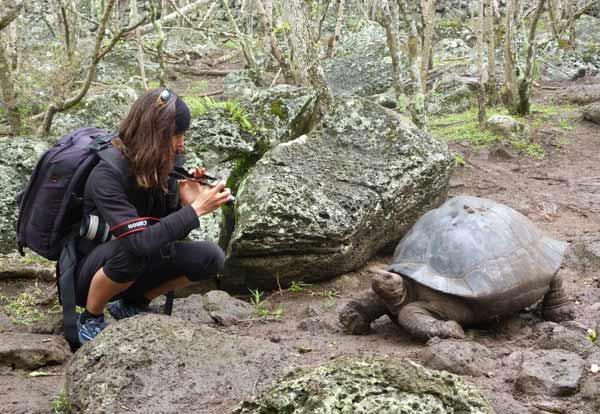 Galapagos : photo de tortue géante à Floréana