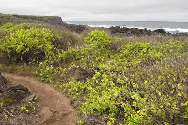 Paysage de San Cristobal aux Galapagos