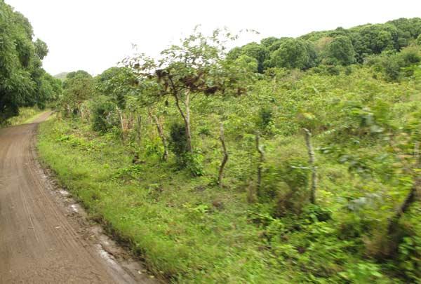 route floreana galapagos