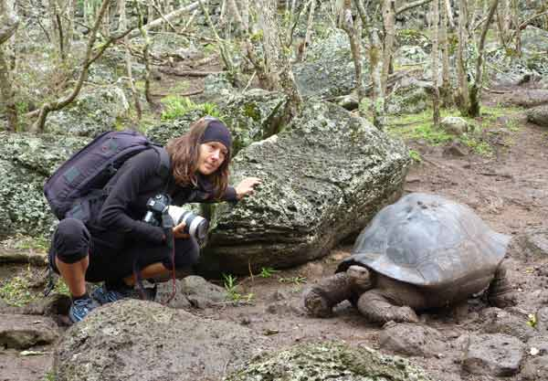 tortue terrestre galapagos