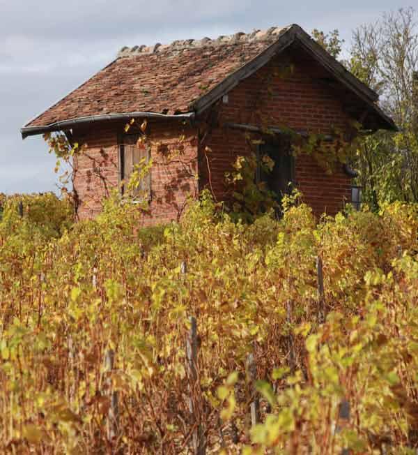 vignoble loire automne