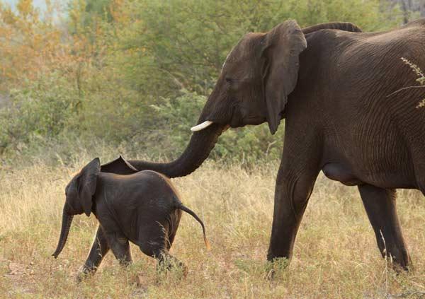 voyage kruger elephants