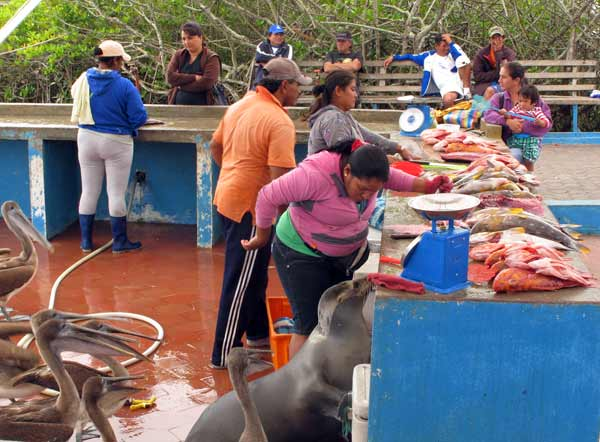 marché poissons galapagos