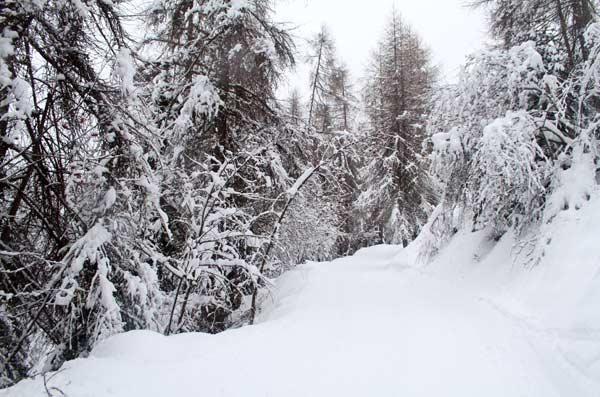 paysages enneiges saint dalmas le selvage