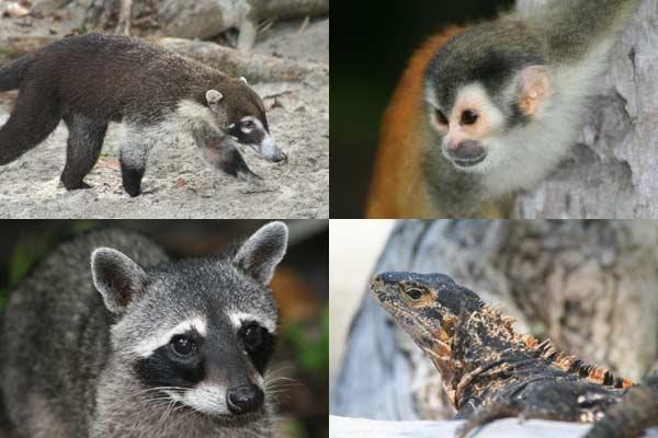 Voyage routard, rencontre avec la faune sauvage
