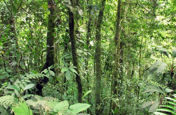 Végétation luxuriante à Mindo en Equateur