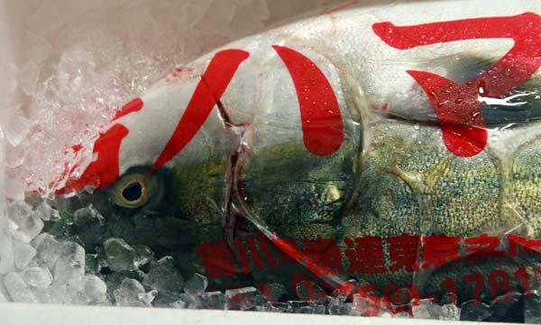 tsujiki market poisson