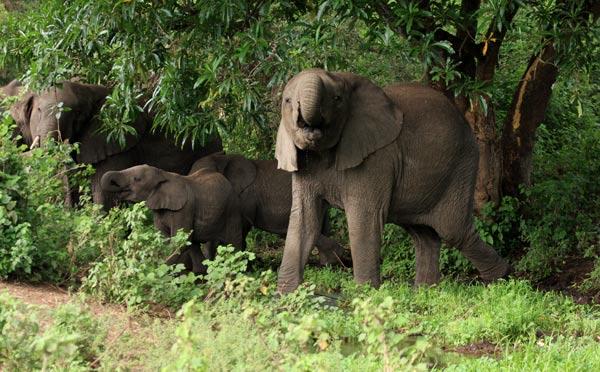 safari afrique big five