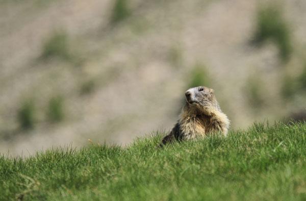 marmotte lacs de prals