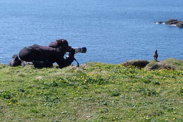 photographe macareux moine île de Lunga Ecosse