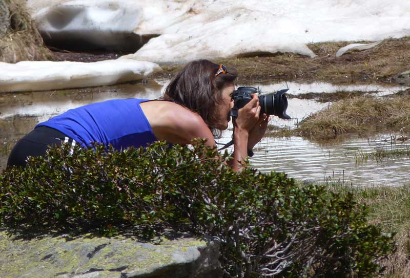 photographie foret boreon