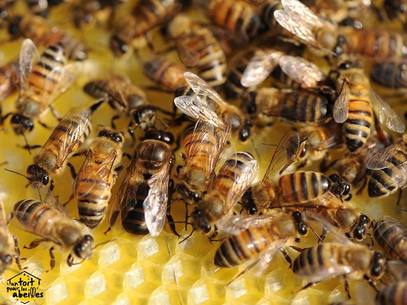 action protection des abeilles