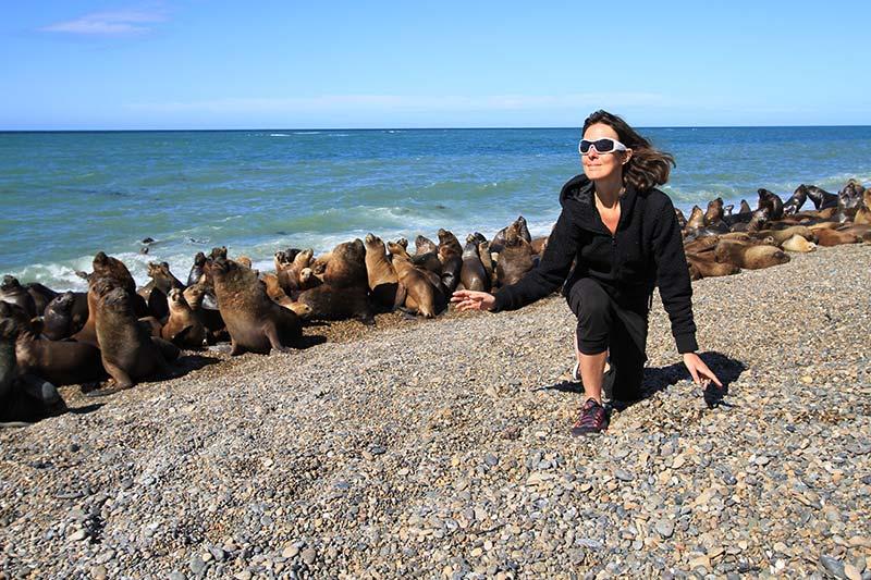 colonie lions de mer patagonie