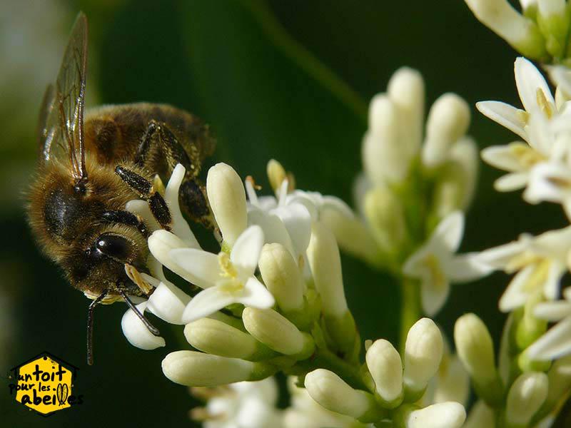comment sauver les abeilles