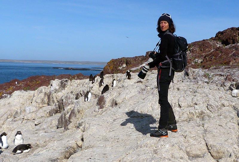 isla pinguino patagonie gorfou sauteur