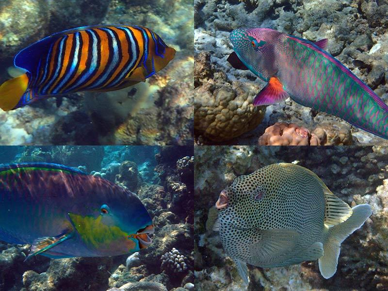 Maldives poissons colorés