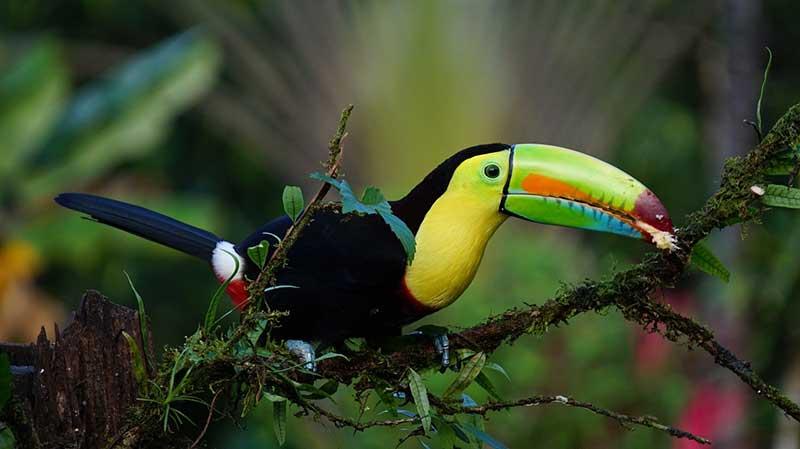 pantanal jungle