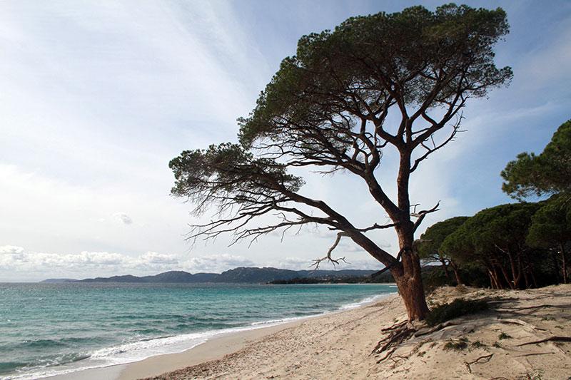 plage Palombaggia corse sud