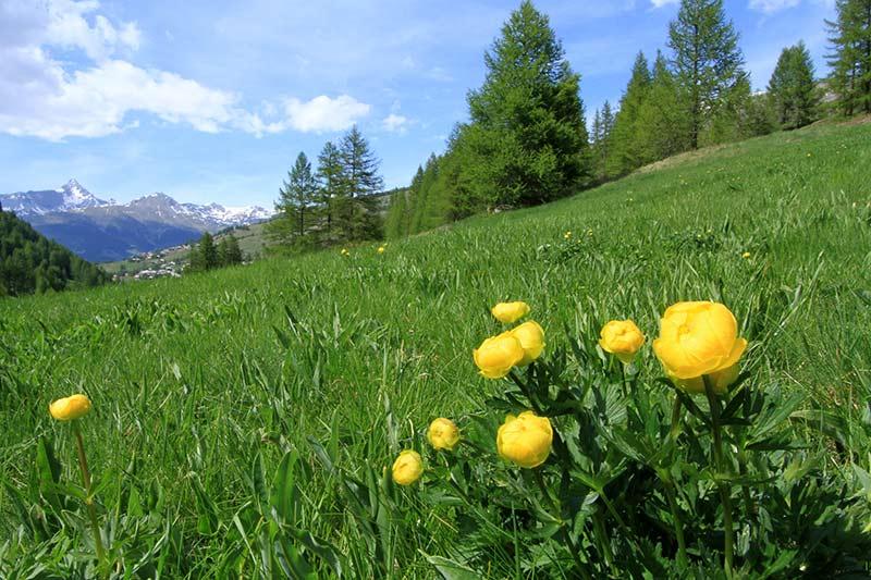 vacances de printemps dans le Queyras