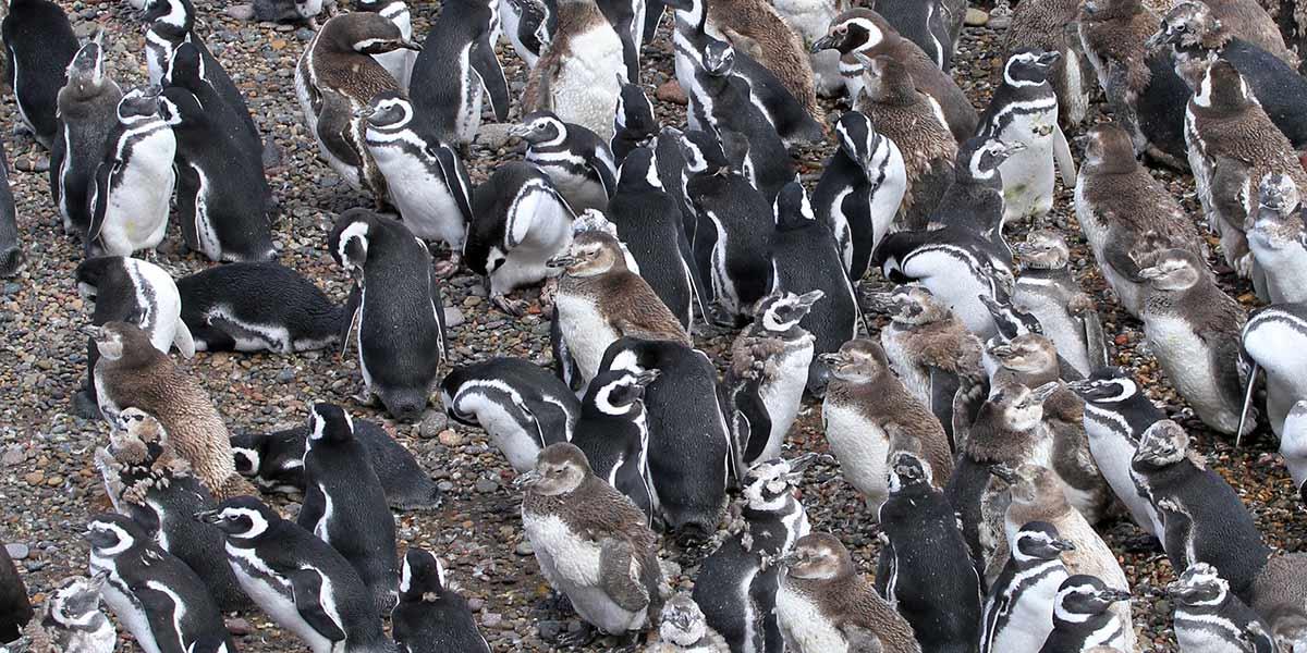 punta tombo patagonie manchots