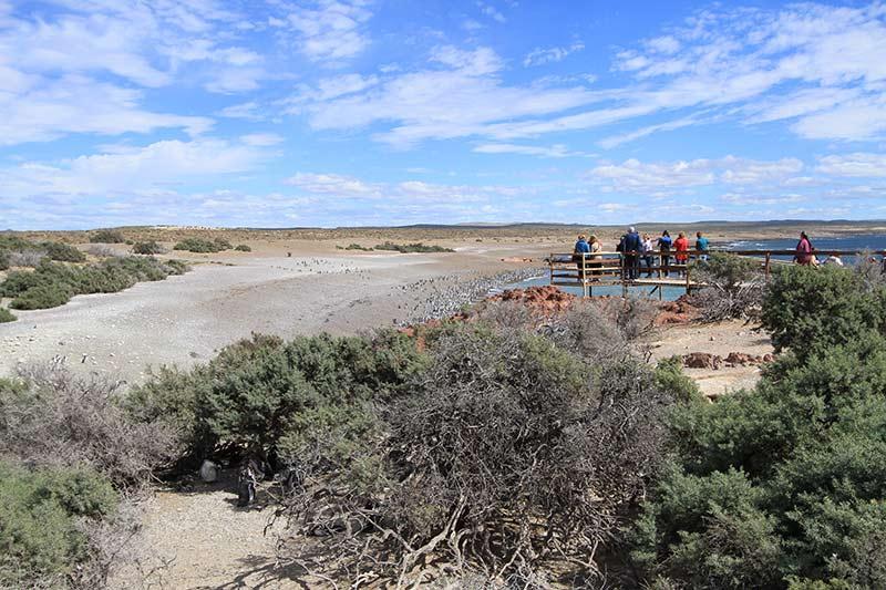 punta tombo en patagonie mirador