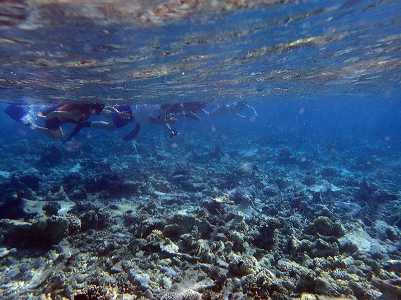ravages snorkelers Maldives