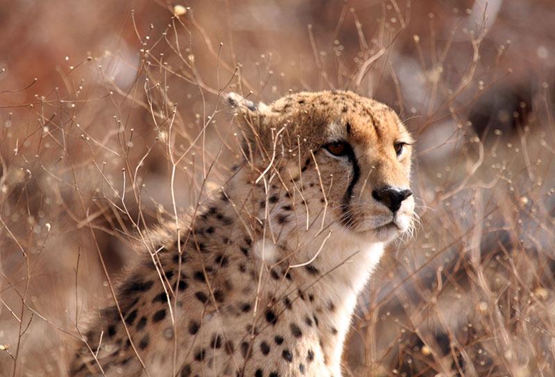safari en Afrique du Sud Kruger