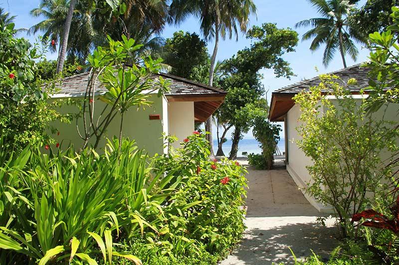 végétation Vilamendhoo Maldives