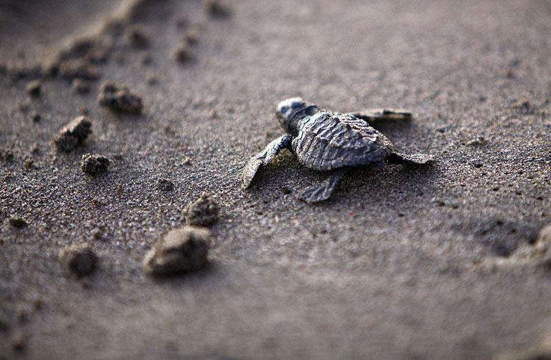 voyage aventure voir des tortues