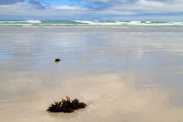 Tortuga Bay aux Galapagos : algues échouées sur la plage