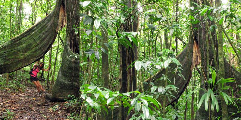 arbres Middleham Falls