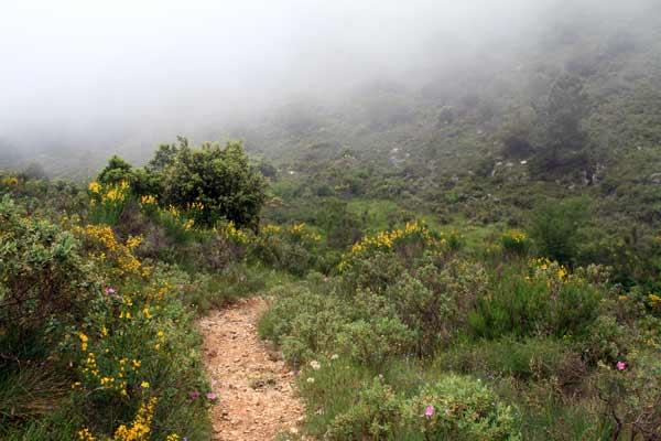Brouillard au col d'Eze
