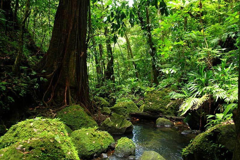 cadre Spanny Falls Dominica